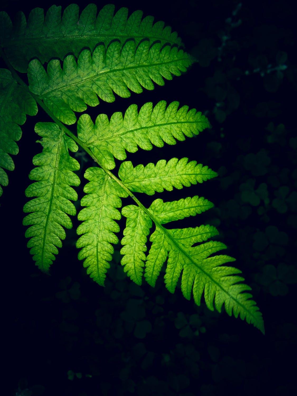 【超清】绿色植物养眼放松手机