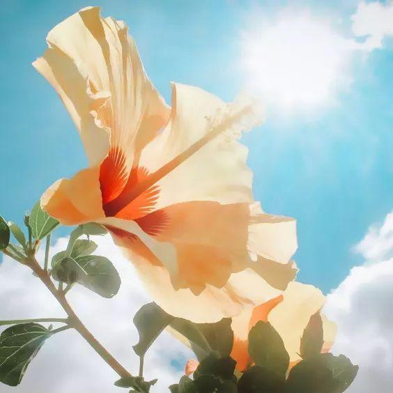 一句话早安心语阳光正能量短句