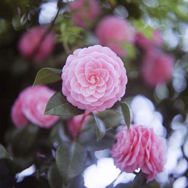 温馨粉色花朵图片,每一张都有一个故事,每一张都让人迷恋